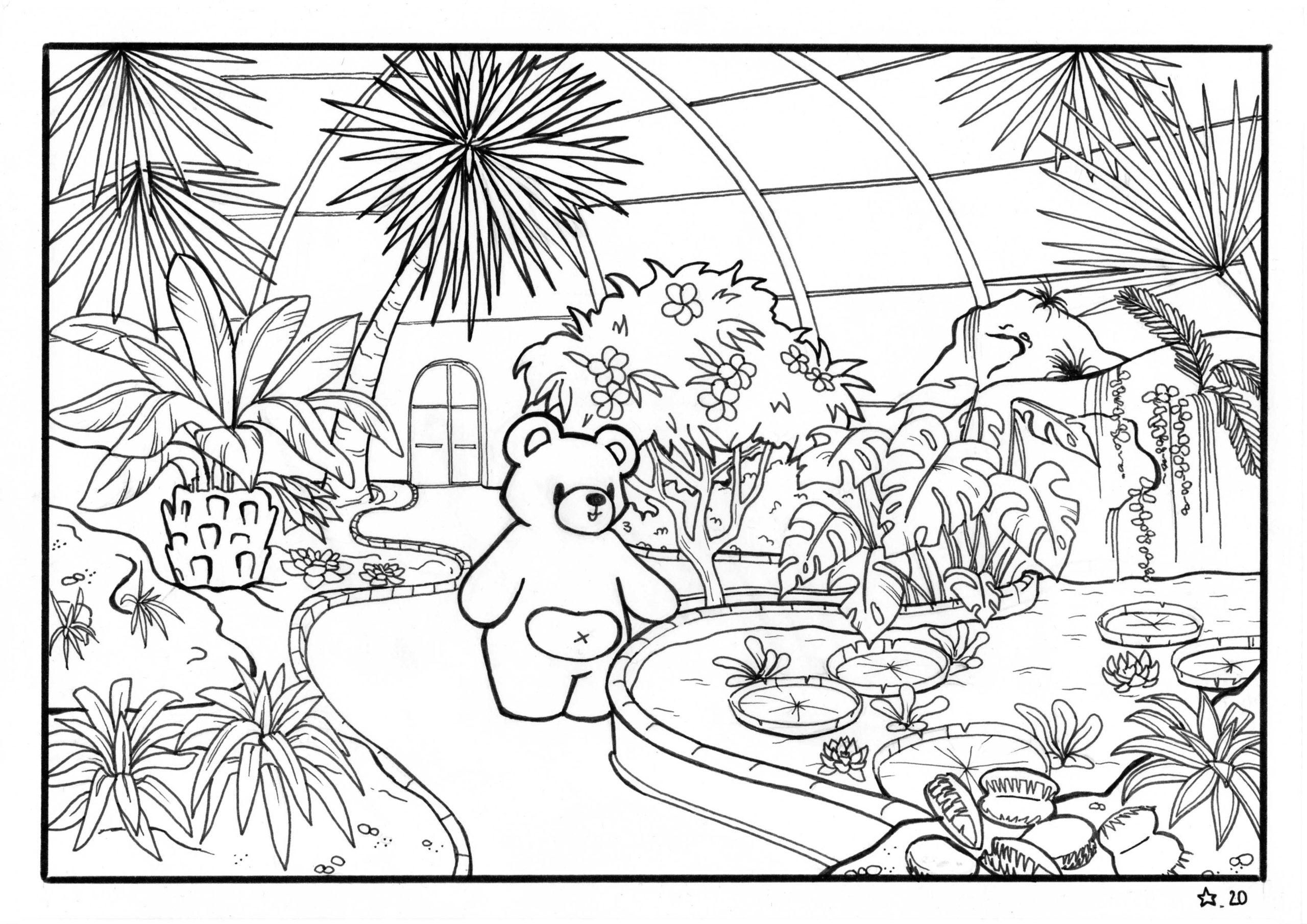 Illustration : coloriage de petit Nours dans la serre tropicale