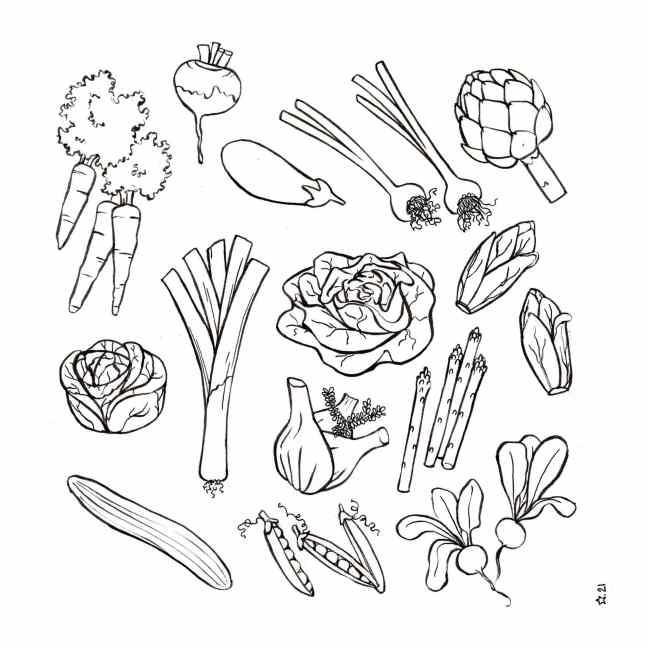illustration : les légumes de printemps. Encre de chine.