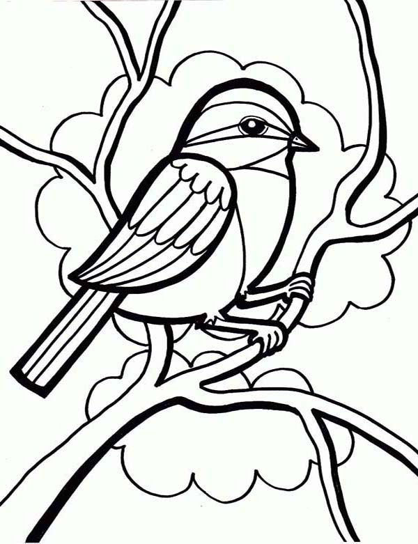 drawing a little cute bird coloring page  color luna