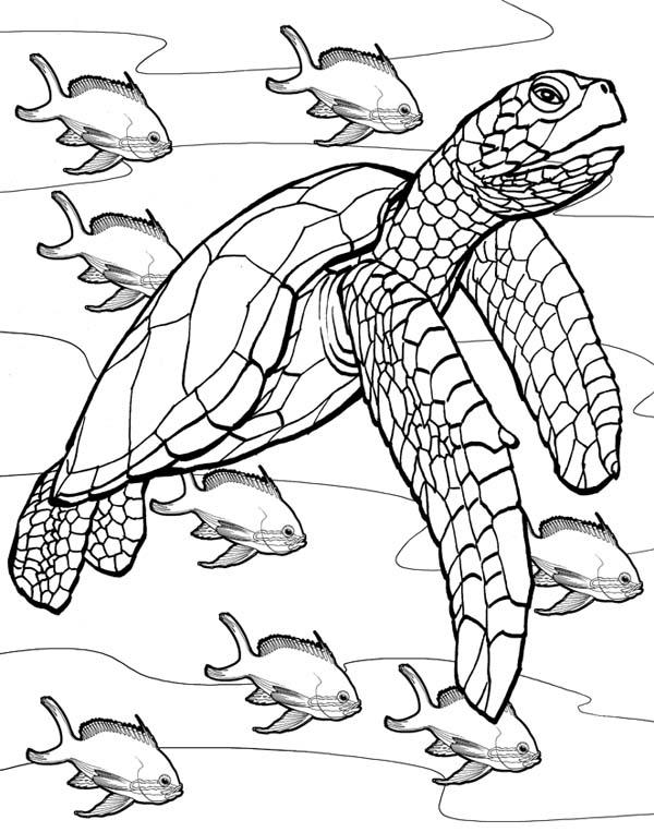 Realistic Printable Sea Turtle Coloring Page Novocom Top