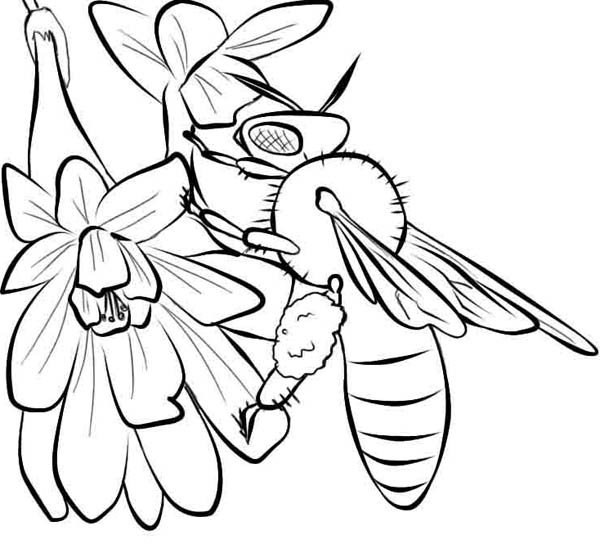 A Bumblebee Suck Up Nectar From The Flowers Coloring Page