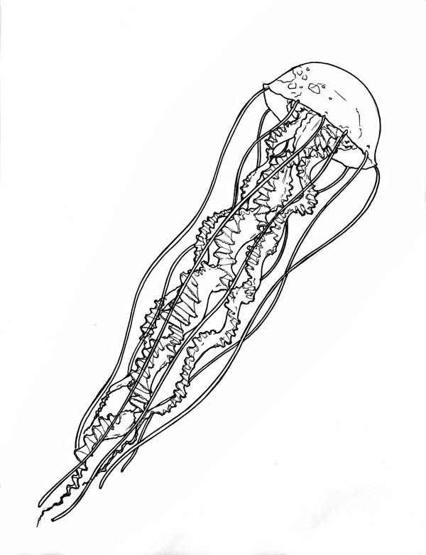 Very Log Spiral Tentacle Jellyfish Coloring Page