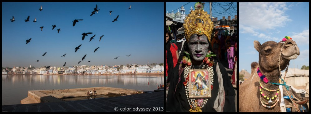 Colors of India : Pushkar