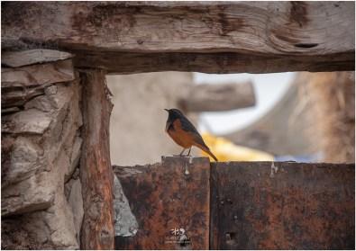 Birds at Charang