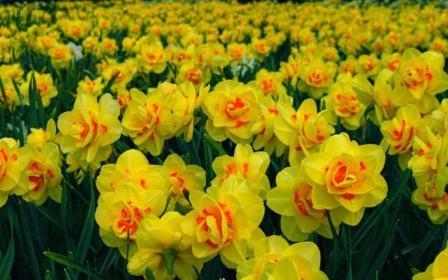 Не всегда растение обильно цветёт даже при должном уходе