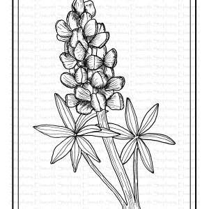 Lupine Flower Coloring Page