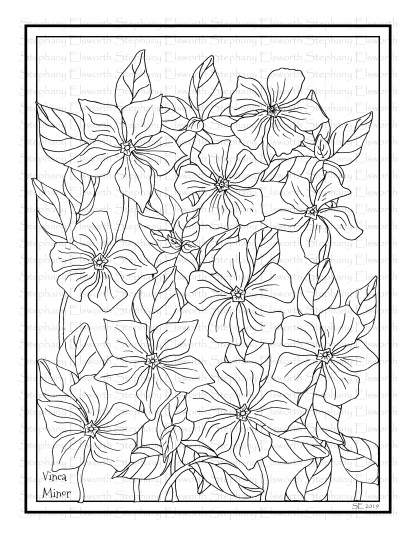 Vinca Minor Flowers Coloring Page