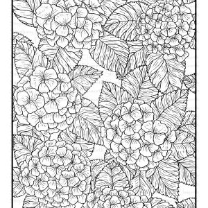 Blossoms and Blooms - Hydrangea Coloring Page