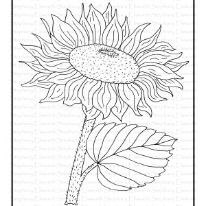 Sunflower Blooms Free Coloring Page