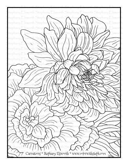 Carnation Flowers Free Coloring Page