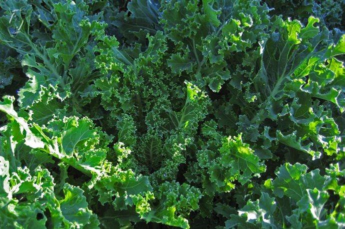 loads of kale