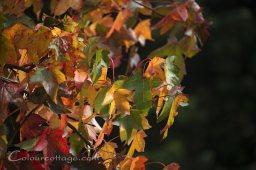 autumn14_02