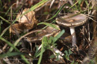 mushrooms01