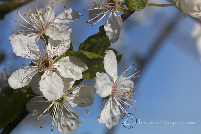 spring15_03
