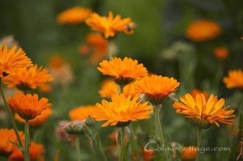 meadow16_08