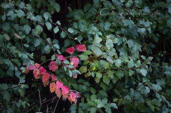gardenfoliage01