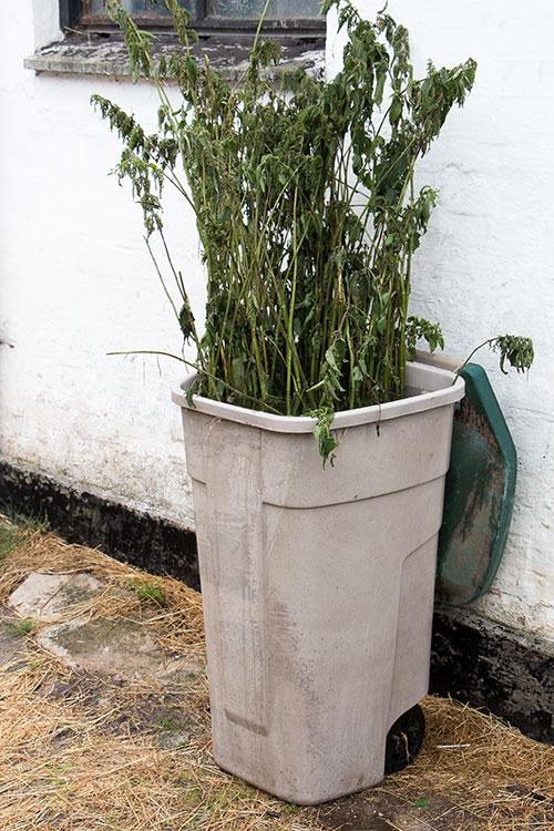 bucket of nettles