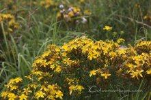 meadow16_15