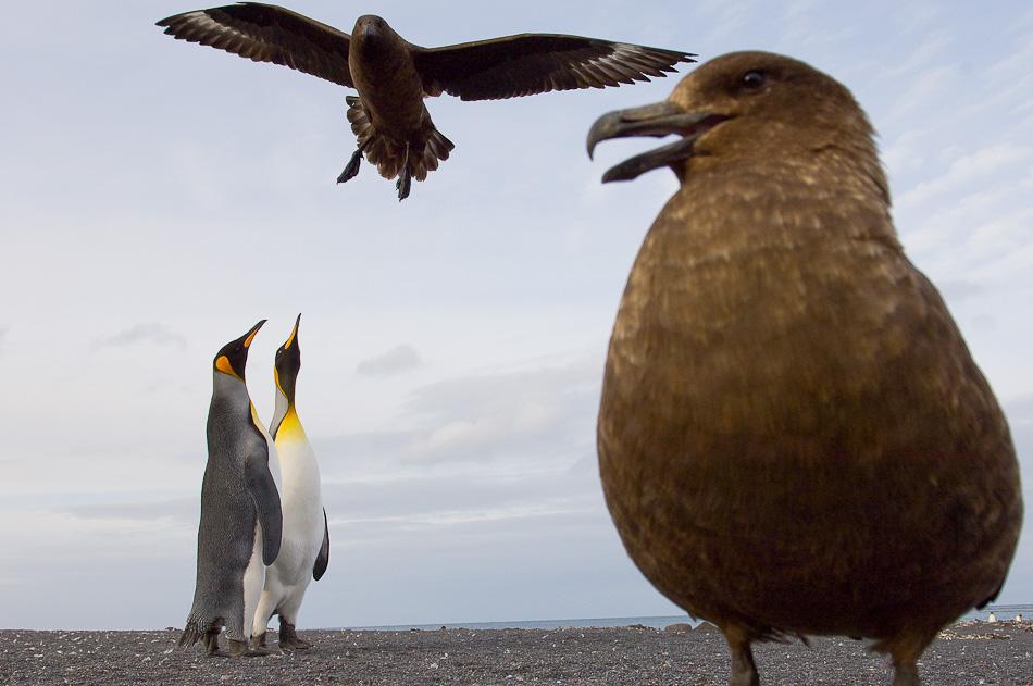 11_unterthiner_penguin