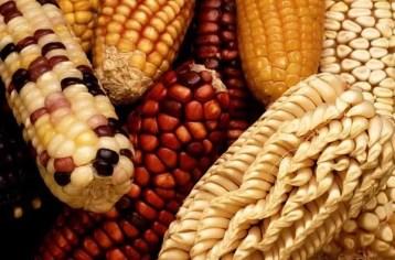 Biodiversità agricola: guida introduttiva
