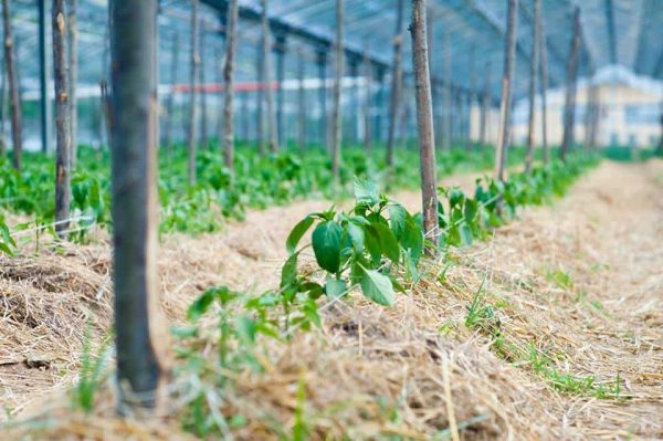 coltivazione biologica