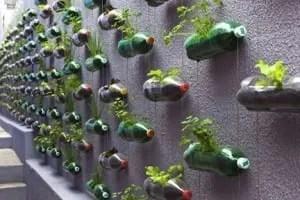 Orto sul balcone o sul terrazzo-Orto verticale con bottiglie di plastica
