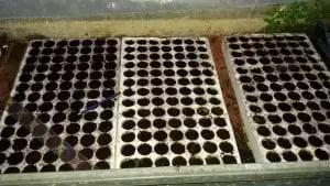 Semenzaio con sementi biologiche per piantine da orto-seminiere con terra