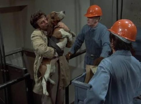 Columbo Most Dangerous Match Dog