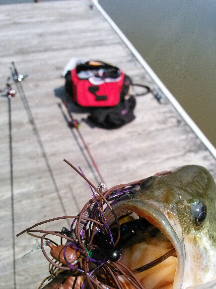 Mr Twister Pocket Craw with Mop Jig