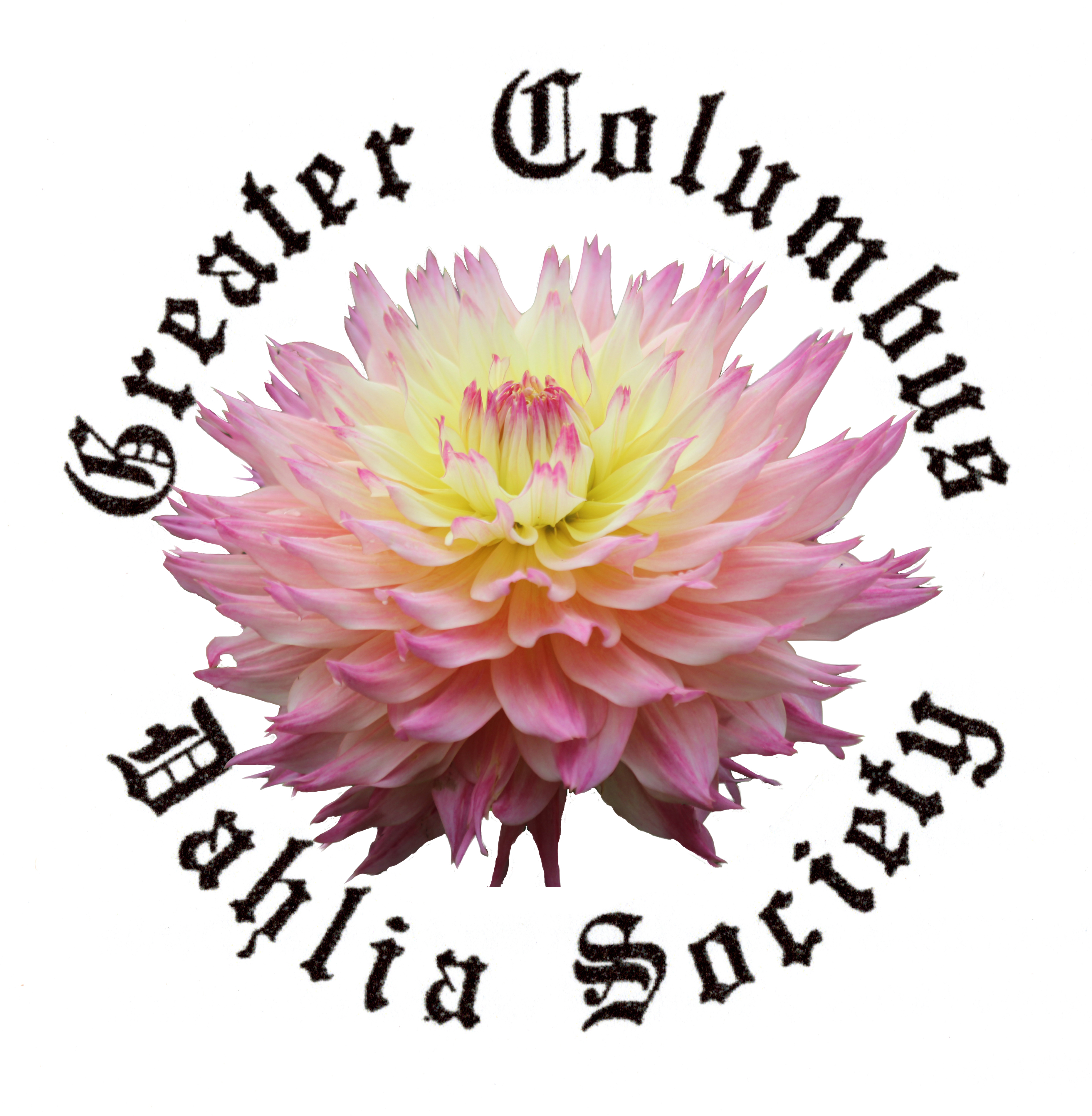 Greater columbus dahlia society gcds the dahlia is grown world wide for its myriad of shapes sizes and vibrant colors the greater columbus dahlia society gcds was founded in 1964 to izmirmasajfo Gallery