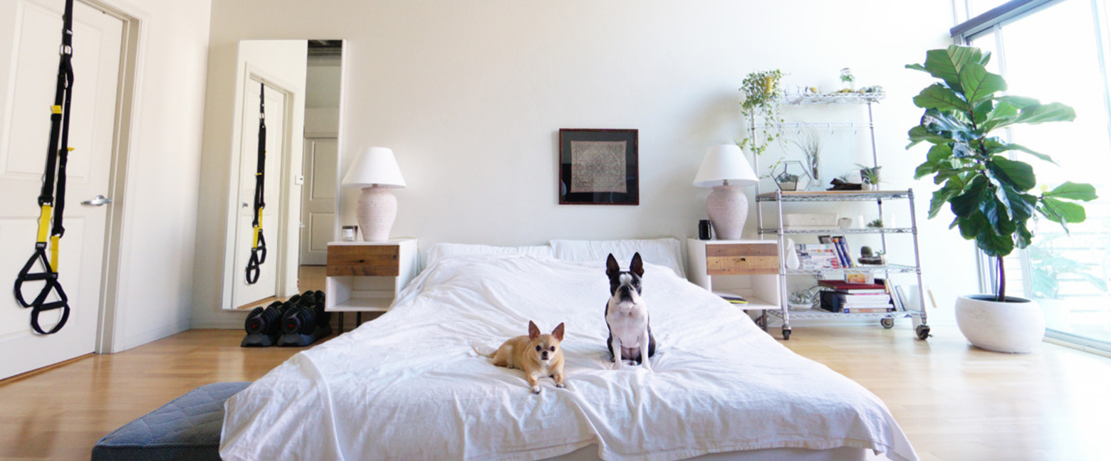 Apartment Living With Pets: Do's And Don'ts