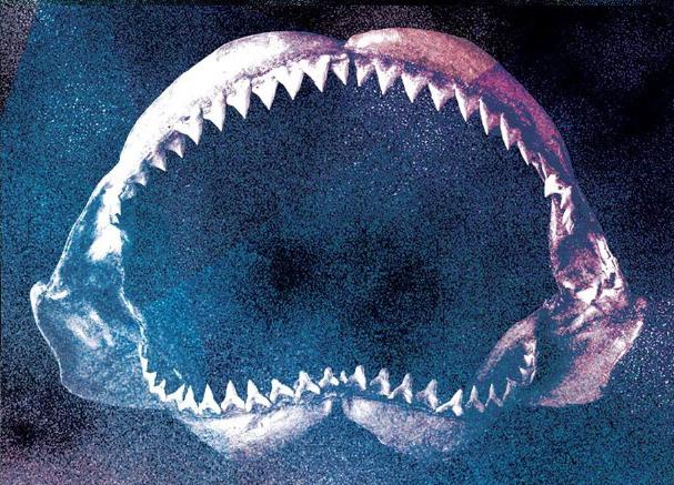 כריש נכנס לבר – סיפורים מתעשיית המוזיקה /// עינת גן שלו על האלבום החדש של M. Ward