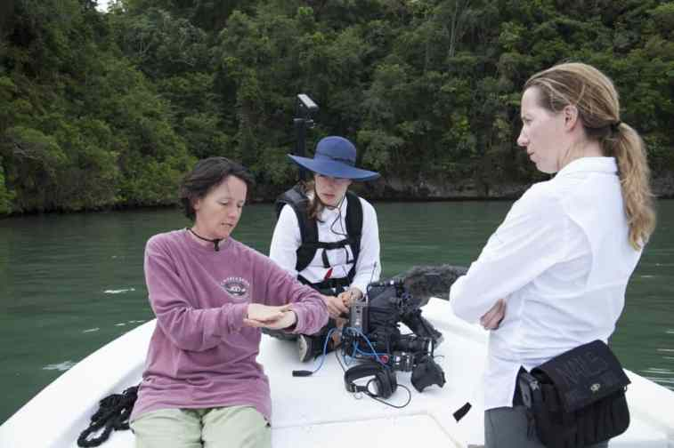 Planning a drone flight over the mangroves. Parque Nacional Los Haitises, Dominican Republic.