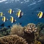 pristine paradise dive resort