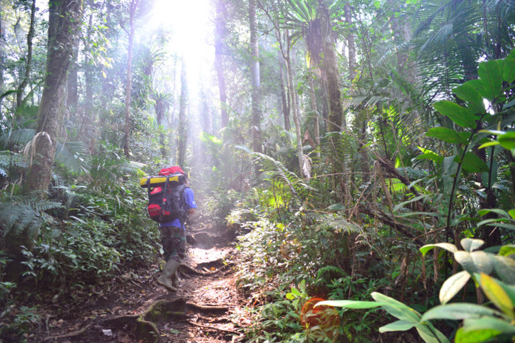 Kerinci Seblat Trekking by come2indonesia