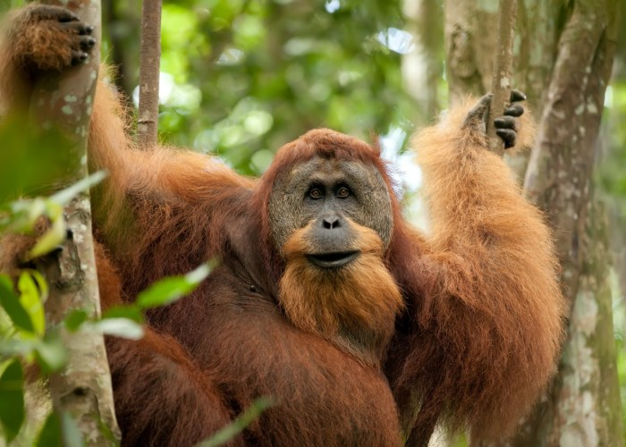 The Tropical North of Sumatra, Nature and Adventure Special Tour