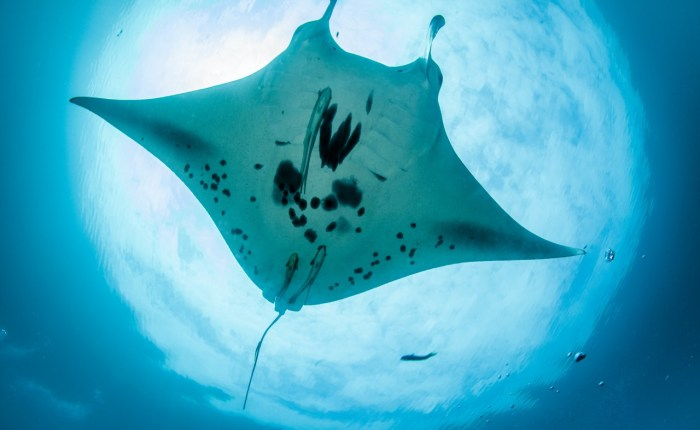 dive indonesia diving tours by come2indonesia