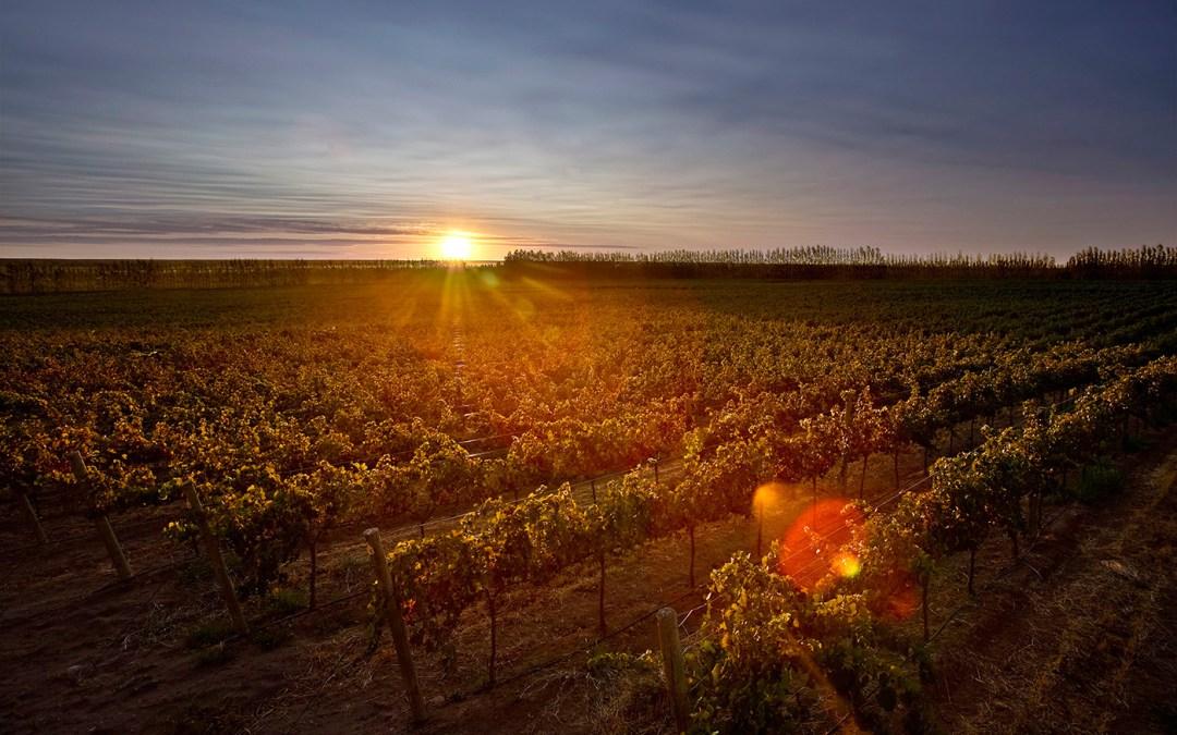 Dégustation de vins, domaine Argentin «Familia Schroeder»