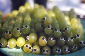 Grape caterpillars.