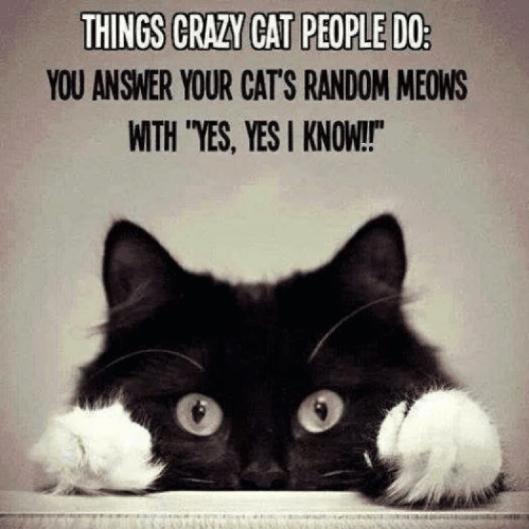 things-crazy-cat-people-do-you-answer-your-cats-random-21879589.png