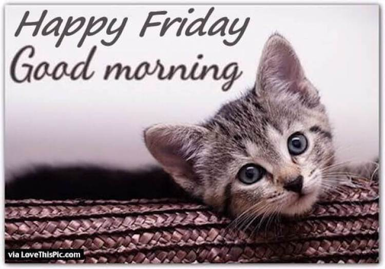 241841-Good-Morning-Happy-Friday-Quote-With-A-Cute-Kitten.jpg