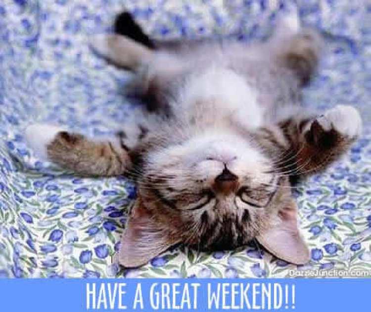 weekend_14weekendcat.jpg