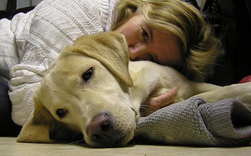emotional support dog photo
