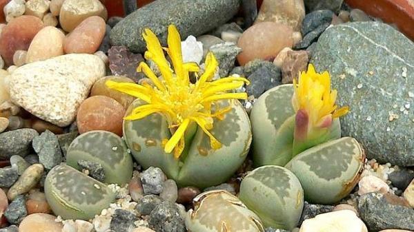 10 flores que no son lo que parecen