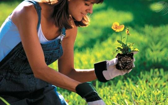 Cinco tareas básica de #jardinería