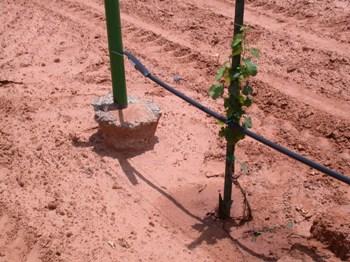vineyard_soil_erosion