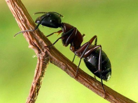 Cuidado de #plantas: Cómo combatir a las #hormigas en forma natural y económica
