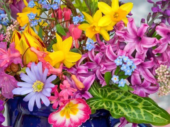 Las mejores #flores para plantar en macetas