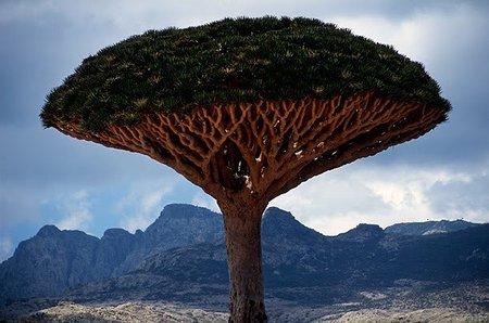 Los 10 árboles más extraños y hermosos del mundo