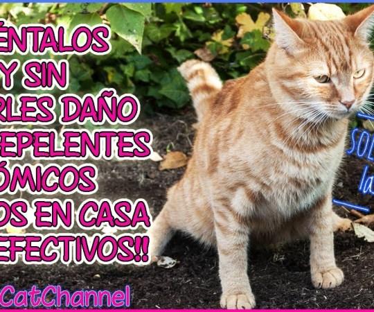 Cómo ahuyentar gatos de tu jardín y huerto sin lastimarlos